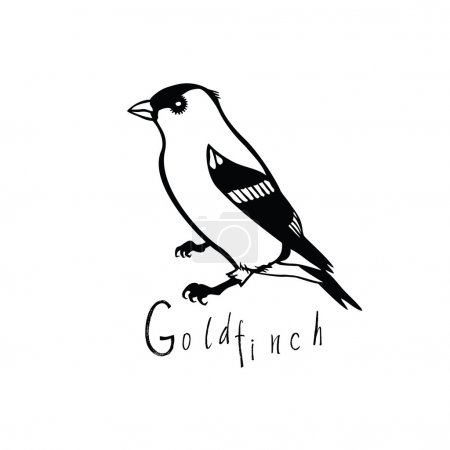 Birds collection Goldfinch Black and white vector