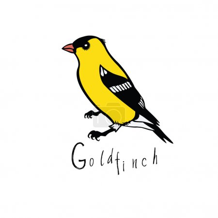 Birds collection Goldfinch Color vector