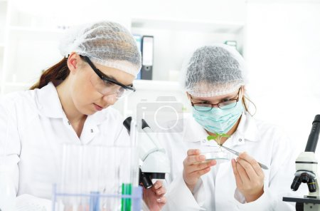 Woman scientist working with tools during scientific experiment in laboratory