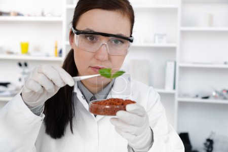 study of genetic modified GMO plants in the laboratory