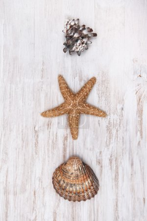 Seashells on the old shabby chic wood background