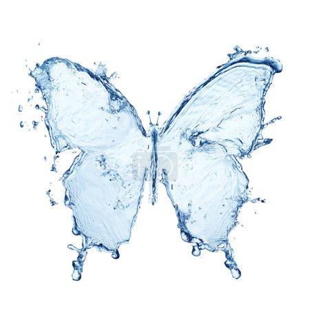 Photo pour Papillon d'eau isolé sur fond blanc - image libre de droit