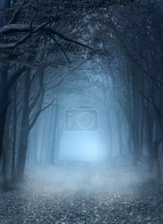 Photo for Road in the blue foggy forest - Royalty Free Image