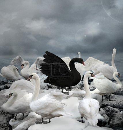 Photo pour Démarquez-vous de la foule, Le cygne noir - image libre de droit