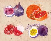 Fruit watercolor figs grapefruit lychee maracuya kraft