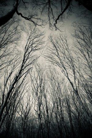 Photo for Spring forest trees branches on sky background - Royalty Free Image