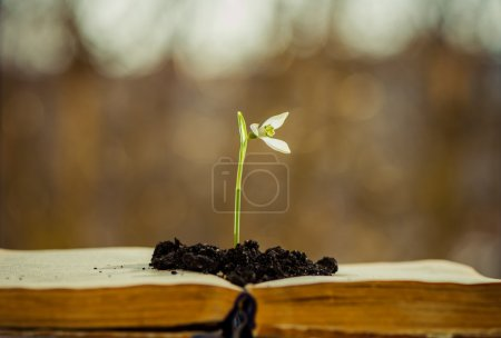 Photo pour Snowdrop fleur gros plan sur les pages de livres vintage - image libre de droit