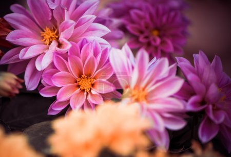 Photo for Fresh summer garden violet flowers closeup - Royalty Free Image