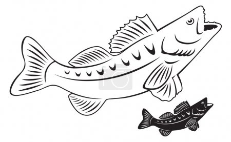 Outline of perch fish