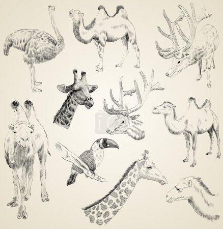 Illustration for Vector set of sketches of animals - Royalty Free Image