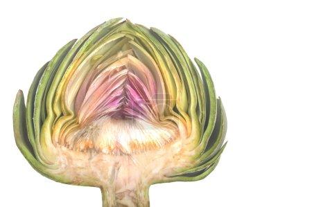 Organic Artichoke