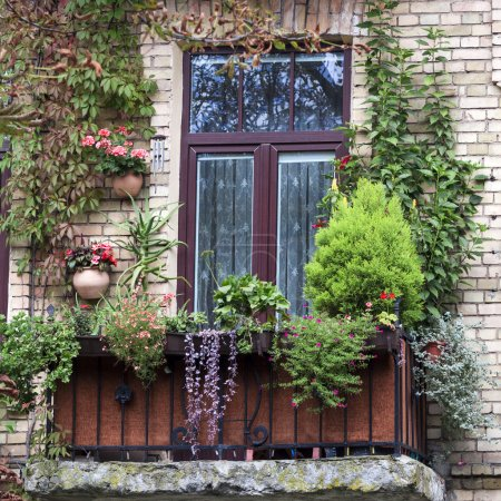 Old balcony overgrown with flowers