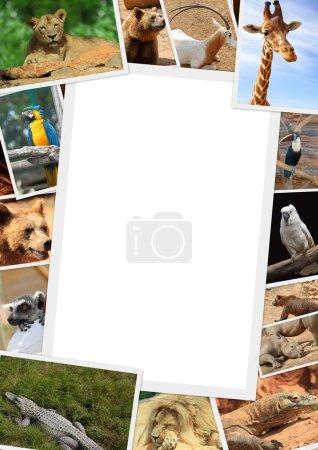 Foto de Marco con la colección de fotografía de animales salvajes - Imagen libre de derechos