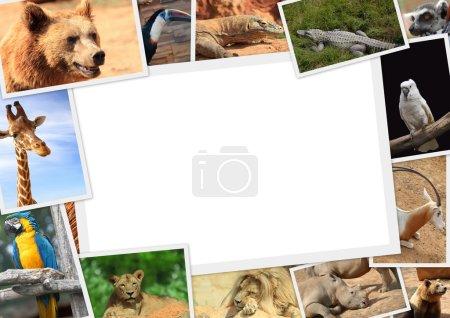 Foto de Marco con colección de animales salvajes fotografía - Imagen libre de derechos