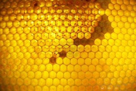 Gold honeycombs full of honey
