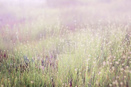 Summer grass meadow