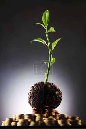 investment grow like a tree