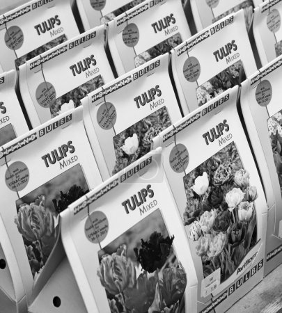 Holland, Amsterdam; 10 October 2001, mixed tulip seeds for sale in a flowers market - EDITORIAL