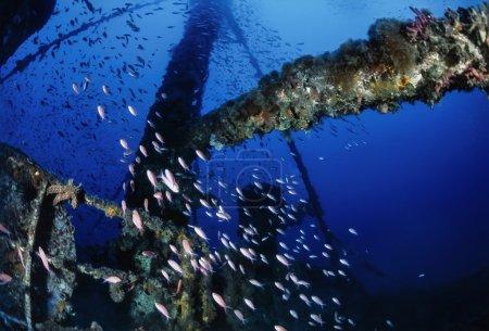 Sunken ship wreck