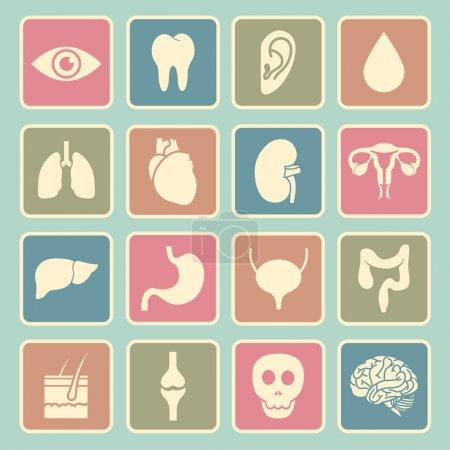 human organs icon