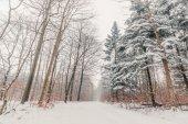 Sníh na stromech v lese