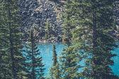 Pine trees by a mountain lake