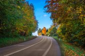 Colorful trees by a road curve