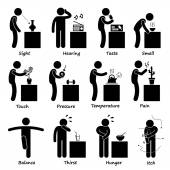 A set of human pictogram representing all the important senses of a human This includes sight hearing tasting smelling touching pressure temperature pain balance thirst hunger itch and feel