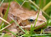 žába v trávě