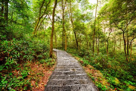 Scenic stone walkway across green woods. Summer landscape