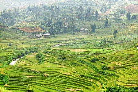 malerischer Blick auf grüne Reisterrassen im Hochland, sa pa, vietnam