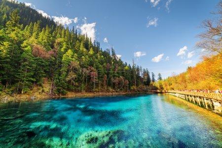 Photo pour Vue fantastique sur la piscine de cinq couleurs (l'étang coloré) avec une eau cristalline azur parmi les bois d'automne et la forêt à feuilles persistantes dans la réserve naturelle de Jiuzhaigou (parc national de la vallée de Jiuzhai), Chine . - image libre de droit
