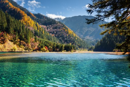 Photo for Amazing view of the Arrow Bamboo Lake with azure crystal clear water among mountains and colorful fall woods, Jiuzhaigou nature reserve (Jiuzhai Valley National Park), China. Scenic autumn landscape. - Royalty Free Image