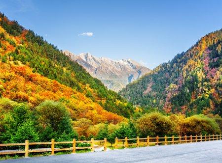 Photo pour Vue sur la montagne depuis la route dans la réserve naturelle de Jiuzhaigou (parc national de la vallée de Jiuzhai), en Chine. Forêt d'automne colorée et montagnes boisées par une journée ensoleillée. Des sommets enneigés sont visibles sur fond de ciel bleu . - image libre de droit