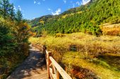 Scenic wooden boardwalk leading along river among fall woods