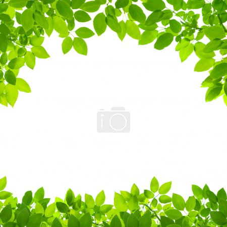 Photo for Green leaves border on white background - Royalty Free Image