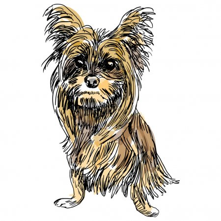 Yorkie Dog Sketch