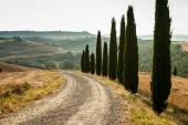 The road in Tuscany with cypress, Italy