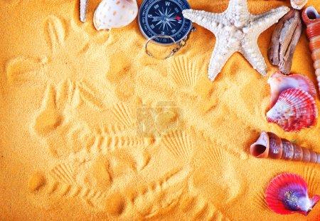color sea shells and starfish