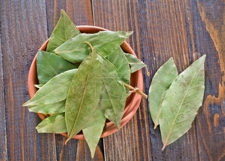 Dry laurel