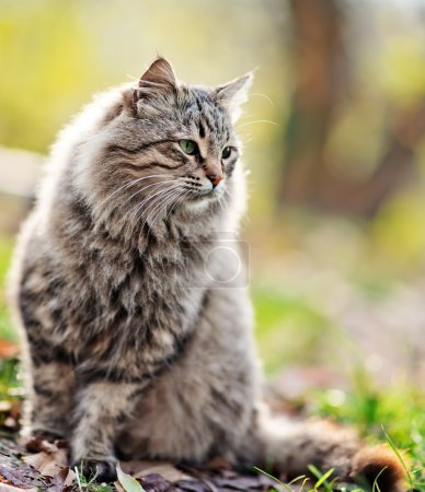 Cat outdoors in autumn park