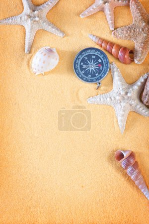 sea shells and starfishes