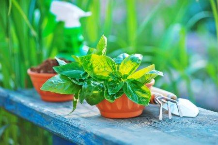 Gardening utensils on a table