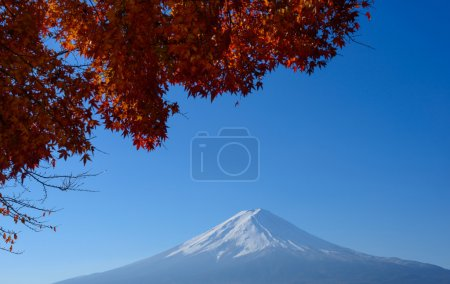 Mt.Fuji and Maples