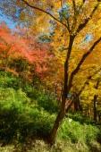 """Постер, картина, фотообои """"Осенняя листва в Korankei, Айти, Япония"""""""