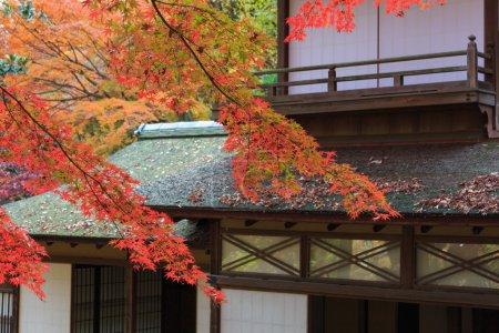 Autumn foliage in the Sankeien Garden, Yokohama, Kanagawa, Japan