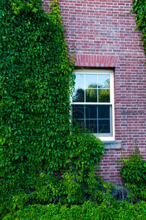 Ivy Covered Dorm