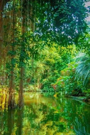 Photo pour La nature sauvage. Paysage de forêt tropicale avec la rivière. Image verticale. - image libre de droit