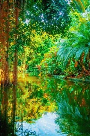 Photo pour La nature sauvage. Paysage de belle forêt tropicale et rivière. Image verticale. - image libre de droit