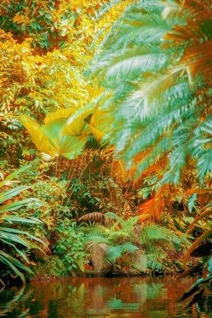 Photo pour Paysage de forêt tropicale avec la rivière. - image libre de droit